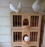 Nonton Film streaming Bird Box - Series Barat - indoxxi ...